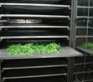 Bandejas para Deshidratar Verduras - Tecnimacor