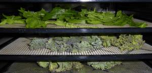Bandejas para Secar Verduras - Tecnimacor